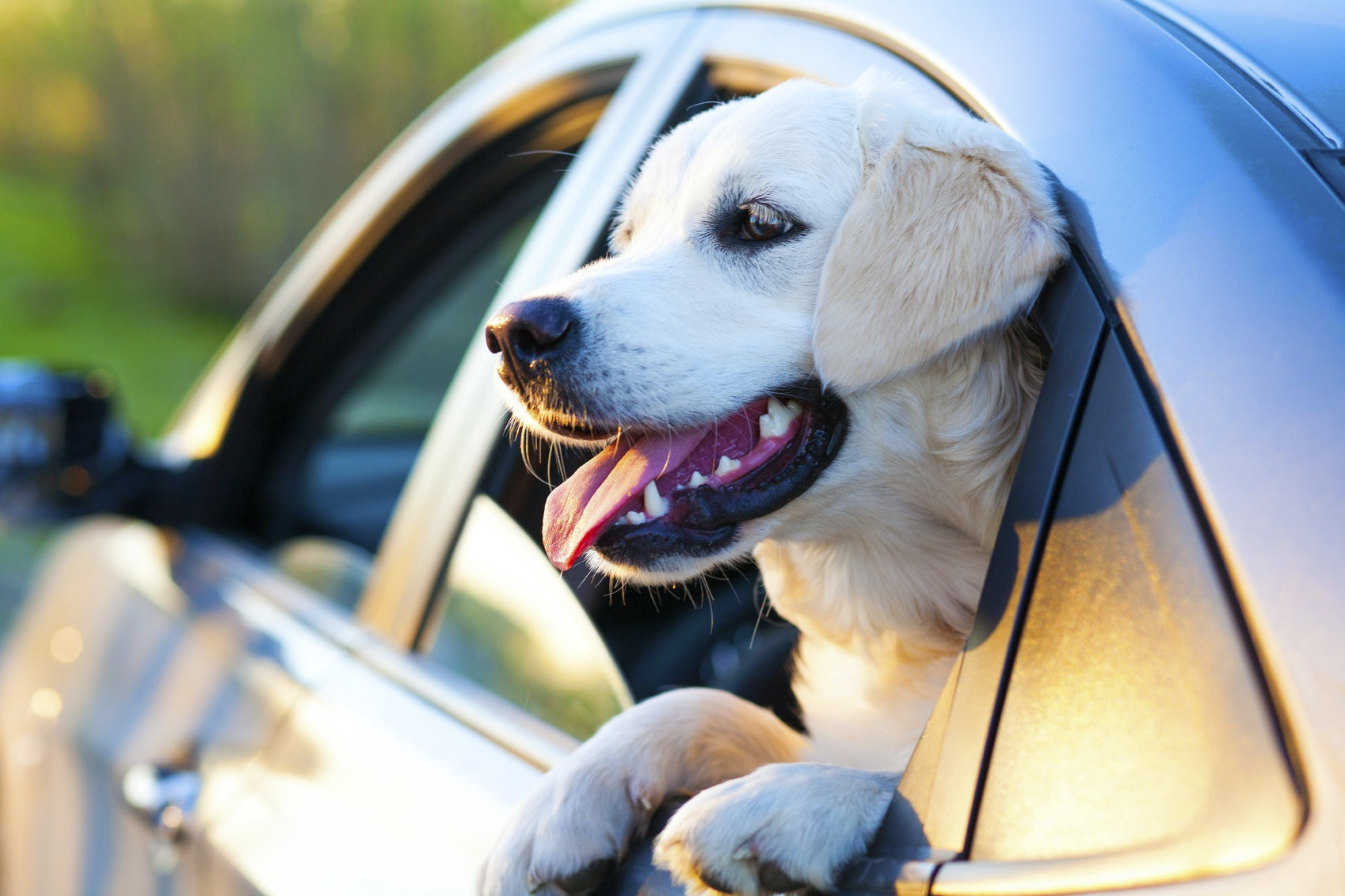 Most Dog Friendly Cars