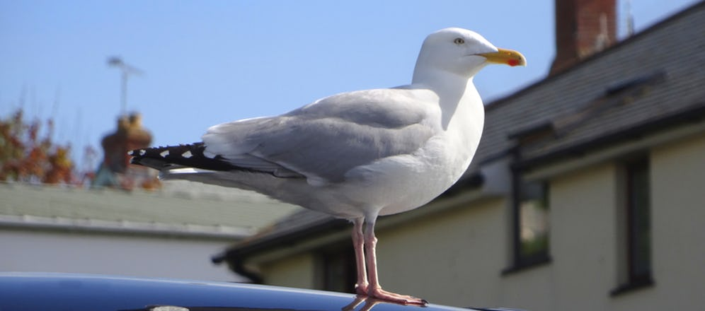 The Poop Scoop: How to Fix the Paint Damage from Bird Poop